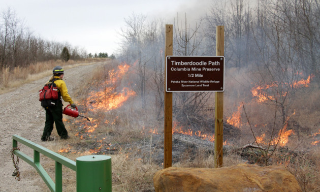 The prairies at Columbia Mine Preserve require fire to clear out the overgrown grasses and slow down invasive plants, protecting habitat for rare birds such as the Henslow's sparrow. Photo by Steve Gifford.