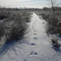 An inviting snowy path at Beanblossom Bottoms Nature Preserve.