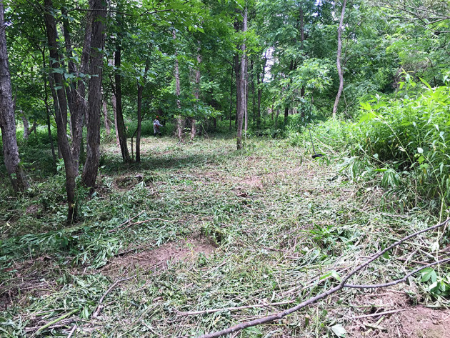 During: Overgrown brush along the creek was removed to make way for higher quality habitat.