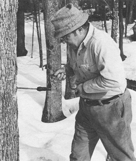 "Wait, no, that's not me, I've only been doing this 15 years! This is Rink Mann using a brace and bit to tap a maple tree. He writes, ""First thing to decide is just how greedy you are for the golden delicious."""