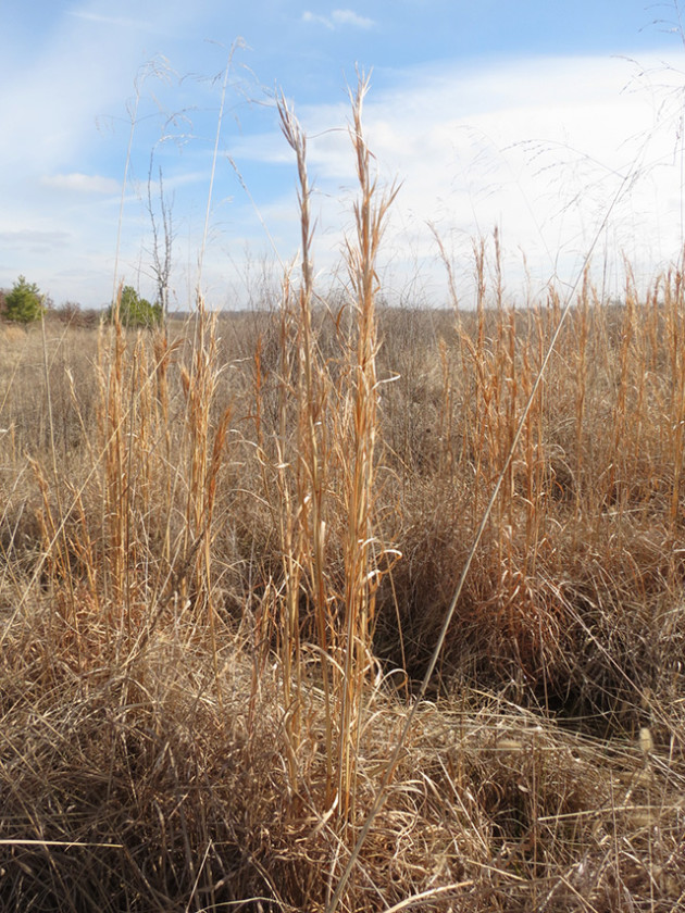 grasslands at Patoka