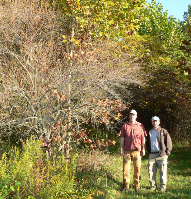 Assistant Director John Lawrence, at right, stands with Dan McGuckin, owner of Habitat Solutions, beside a large autumn olive that was treated with an herbicide. Sycamore received funding from the Natural Resource Conservation Service, along with an in-kind donation from Habitat Solutions (HS), for HS to do three years of invasives eradication at TTE.