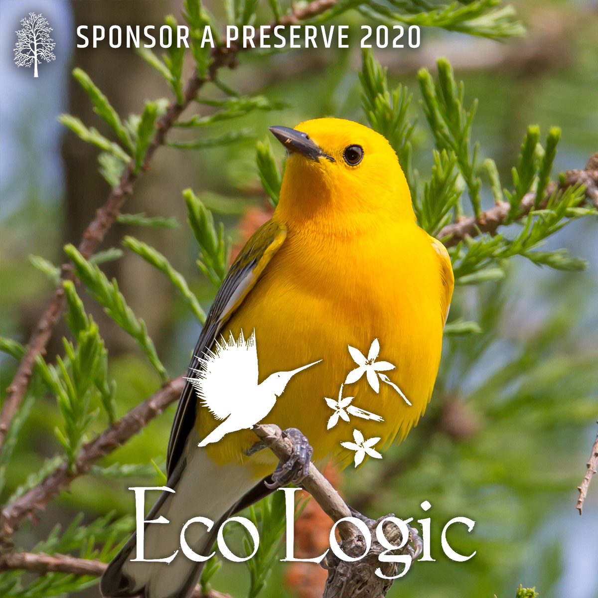 eco logic graphic
