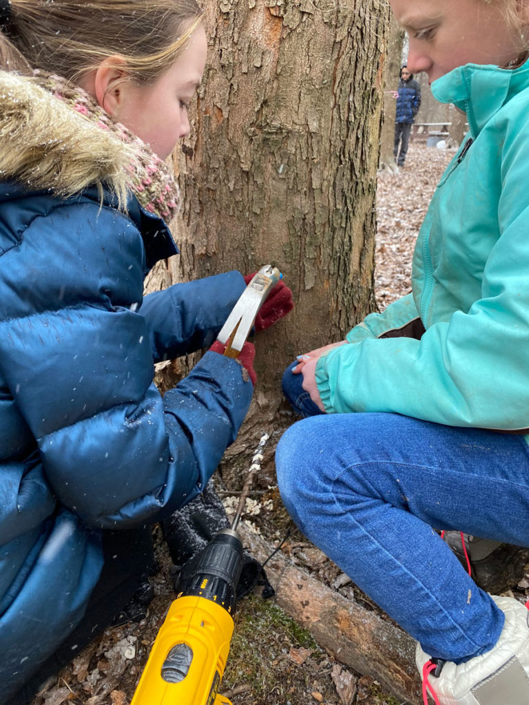 Maple Tapping at Cedars Christian School
