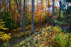 Fall Colors at Cedar Crest by Hugh Hazelrigg